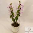 Jeles vesszőkosbor (Dendrobium nobile)