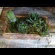 Élőnövény dekoráció