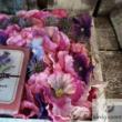 Ajándék doboz TERITA szappannal