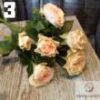 Csoportos rózsa