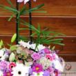 Virágkirályság