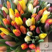 Vegyes színű tulipán csokor