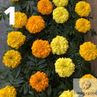 Bársonyvirág (Tagetes)