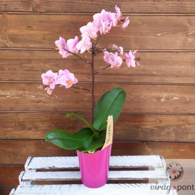 Sokvirágú orchidea (Phalaenopsis multiflora)