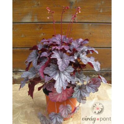 Tűzgyöngyvirág (Heuchera)